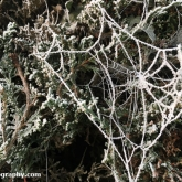 My Patch - Frost on a spiders web