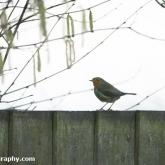 My Patch - Robin