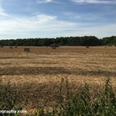 My Patch - baling straw