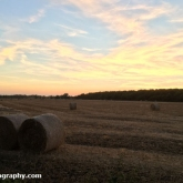 My Patch - Straw bales