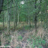 My Patch - Copse