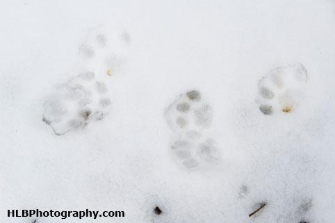 My Patch - Cat snow tracks