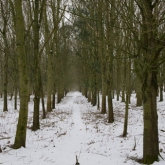My Patch - The copse
