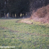 My Patch - Red legged partridge