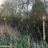 Nest boxes in the field