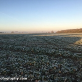 Frosty morning in the field