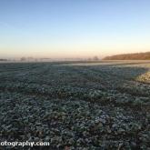 Frosty morning in the field