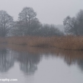 RSPB Ham Wall - Reed beds