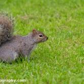 Squirrels in Victoria Park, Bath