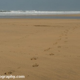 sandymouthbeach2012-31