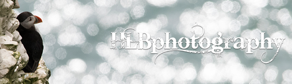 HLB Photography – Blog